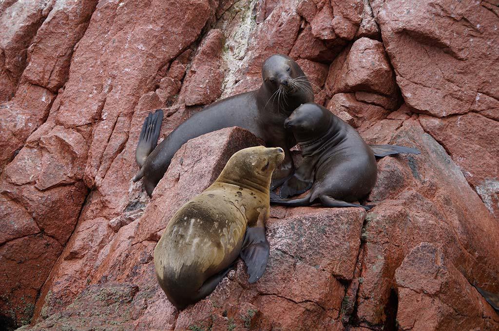 travel to Islas Ballestas Peru