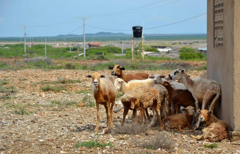 how to travel to cabo de la vela