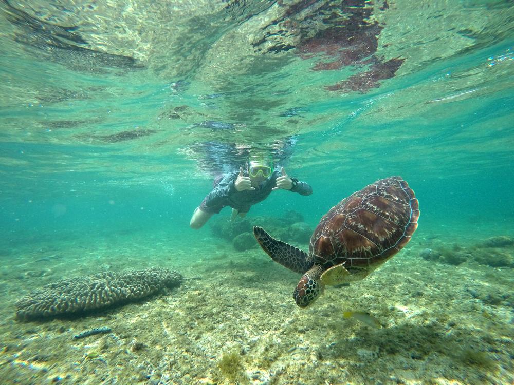 swim with turtles apo island