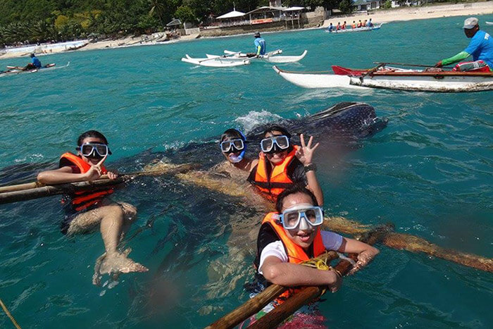 snorkeling with whale sharks cebu