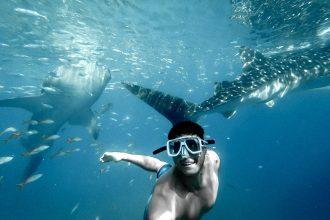 whale shark Cebu Philippines