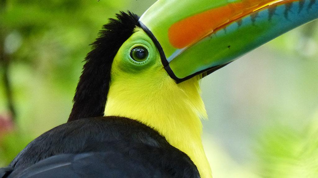 best animal hikes Costa Rica