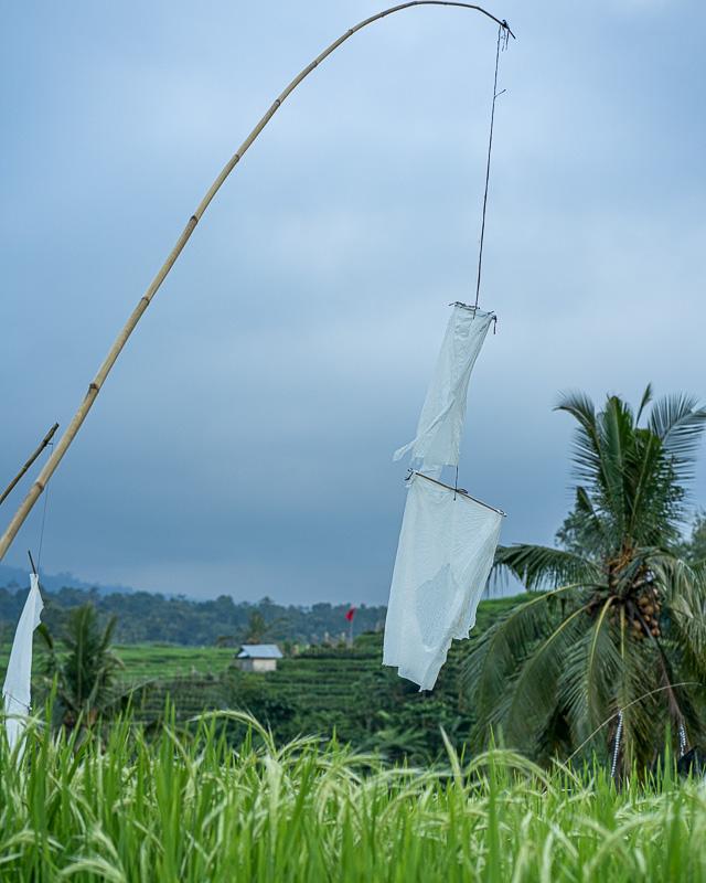Jatiluwih Rice Fields Bali