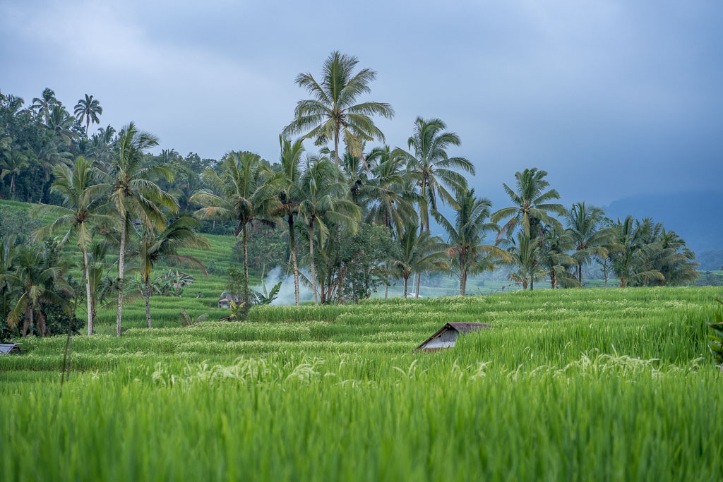 best Bali rice terraces