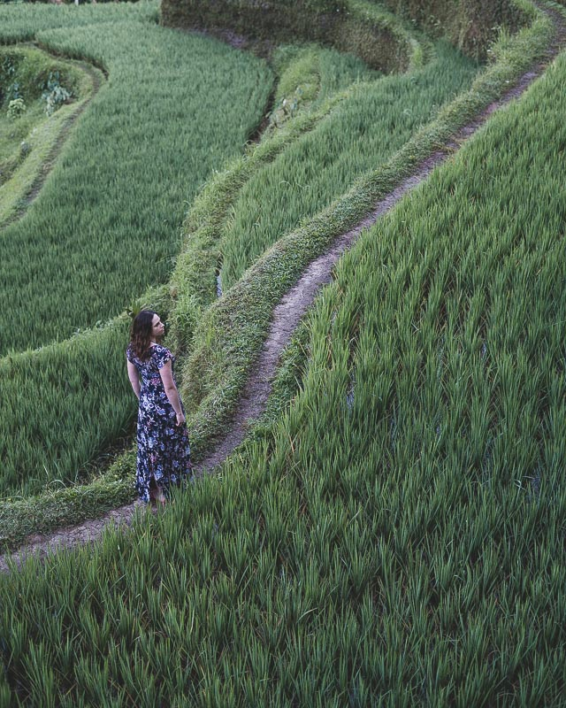 rice terrace Ubud Bali
