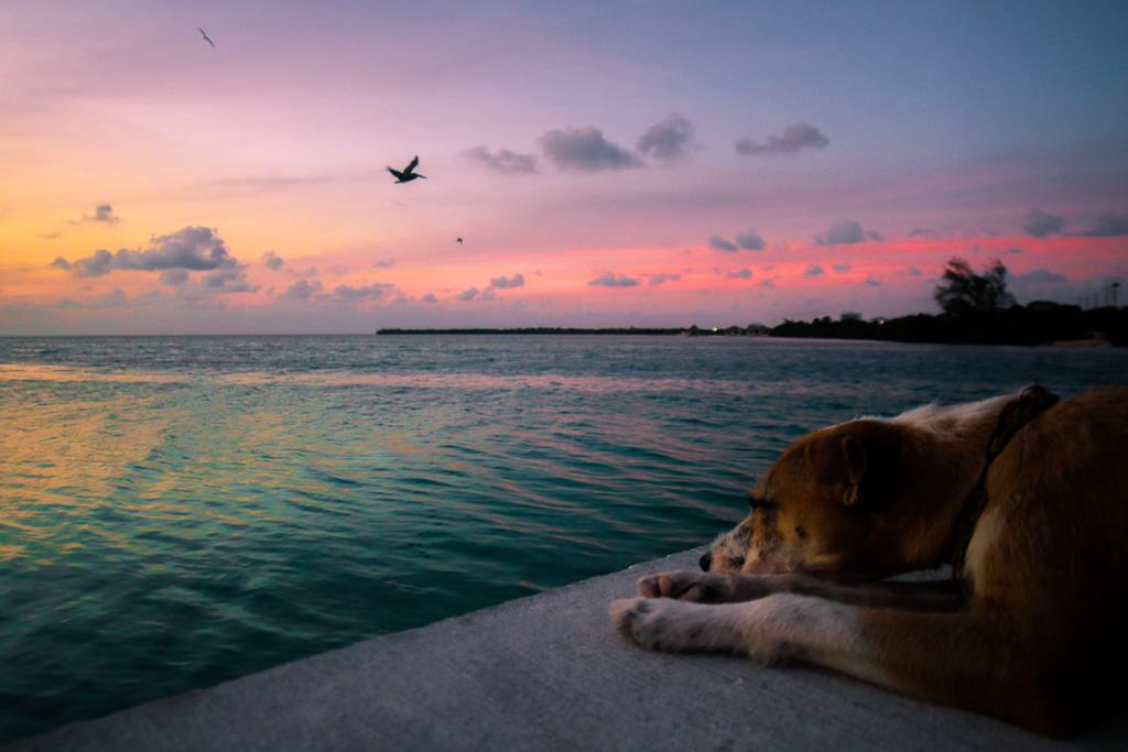Best Belize Adventures