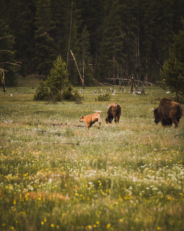 how long to spend in yellowstone
