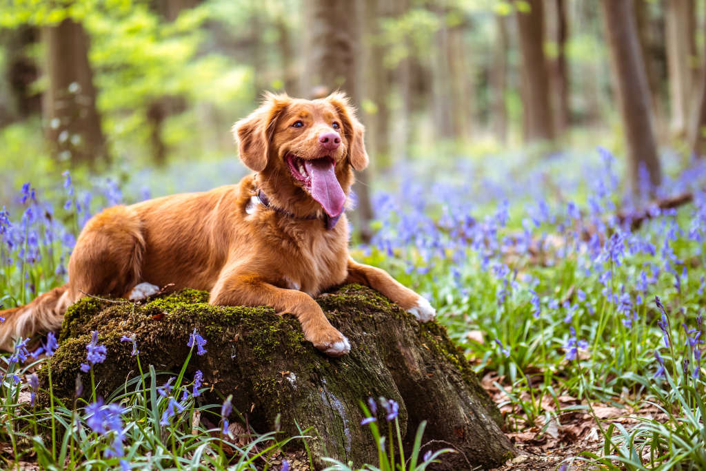 best dogs for RV living