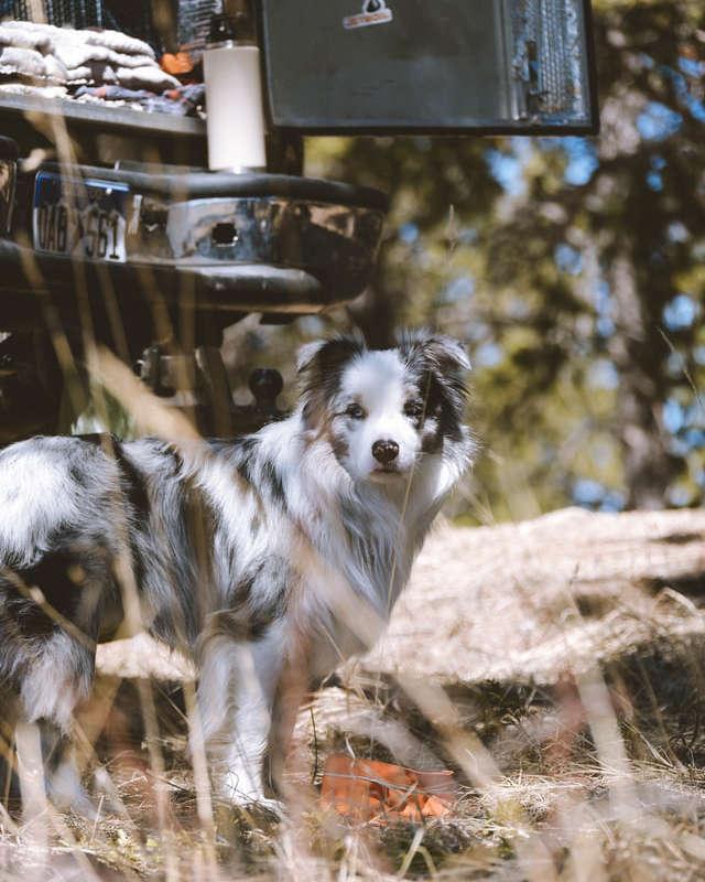 RV dog trip
